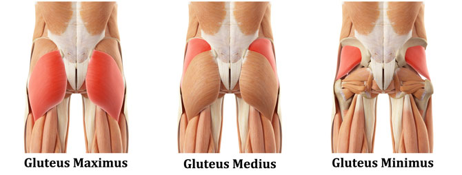 3-gluteus-muscles