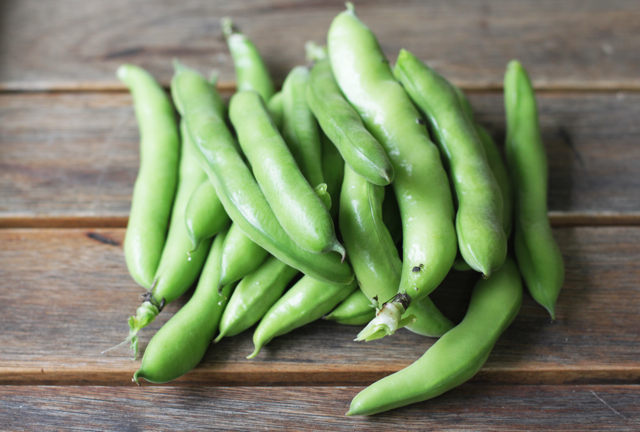 broad-beans-in-their-pods.jpg