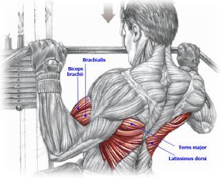 Love Your Back: A Lesson on the Importance of Your Back Muscles -