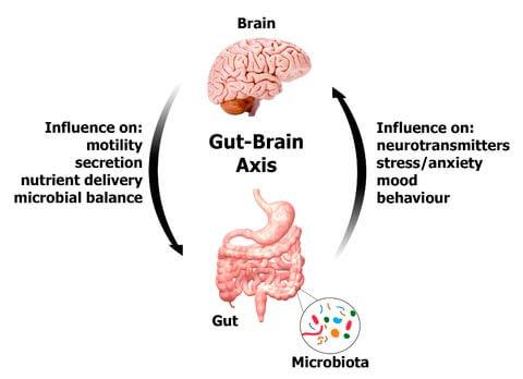 Gut-Brain_Axis