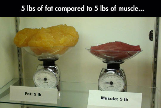 cool-comparison-pounds-fat-versus-muscle