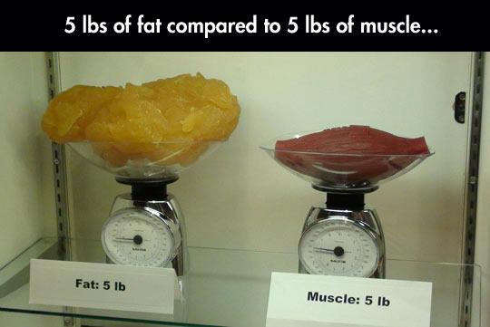 cool-comparison-pounds-fat-versus-muscle