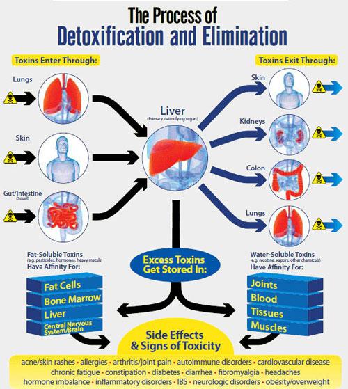 Liver-Detox